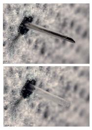 Figure 3 Weibel