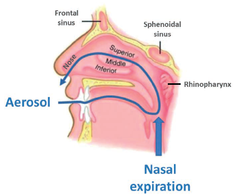 Figure 1: The RetroNose concept: drug delivery through the buccal cavity during the nasal expiratory phase, causes drug particles to enter the nasal cavities through the rhinopharynx.
